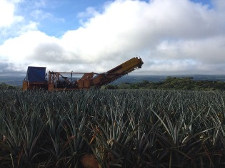 PineappleHarvester