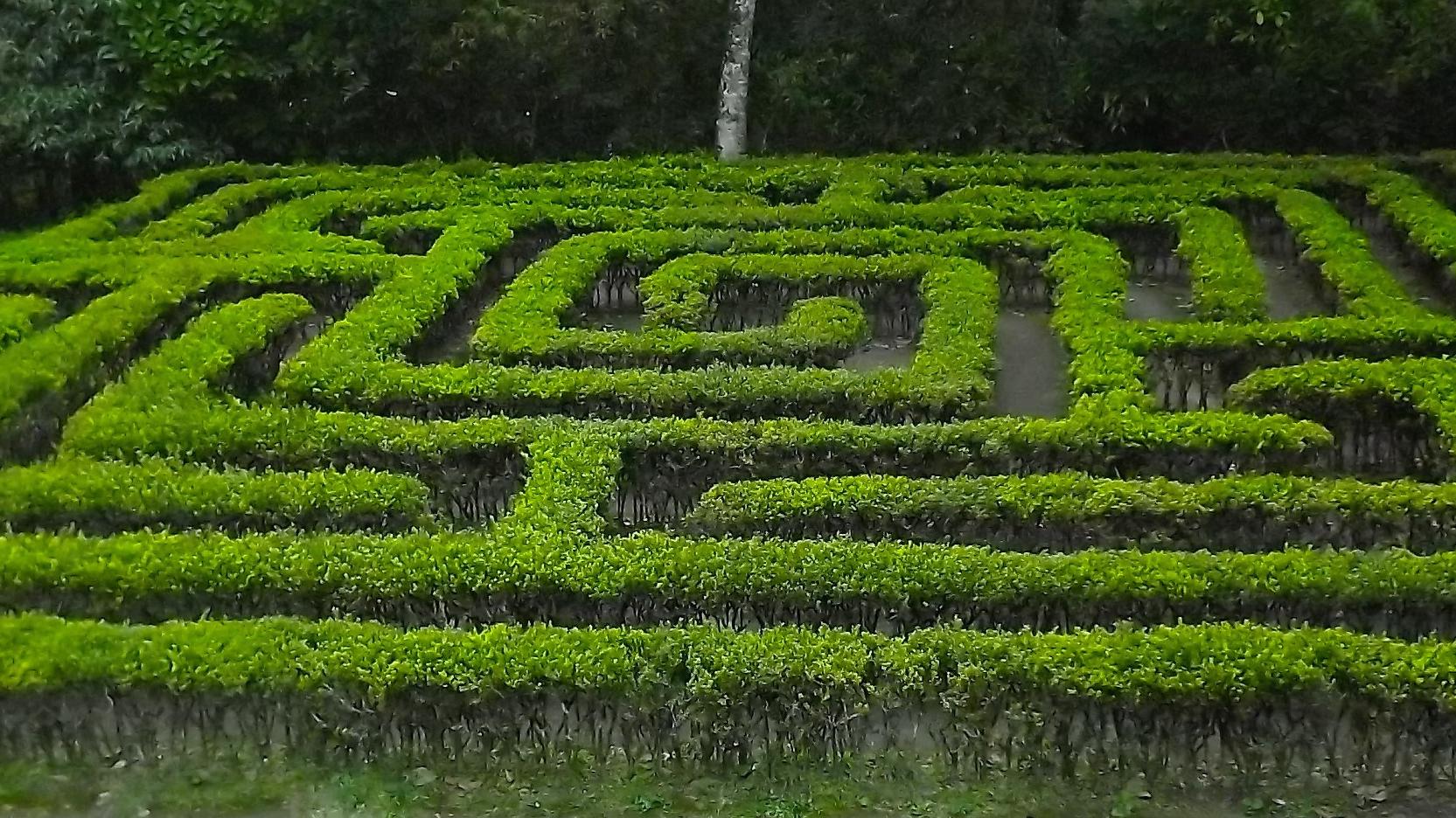 A maze in the Jardín Botánico del Quindío, in Calarcá, Quindío, Colombia. (Photo by Sergio D. Botero.)