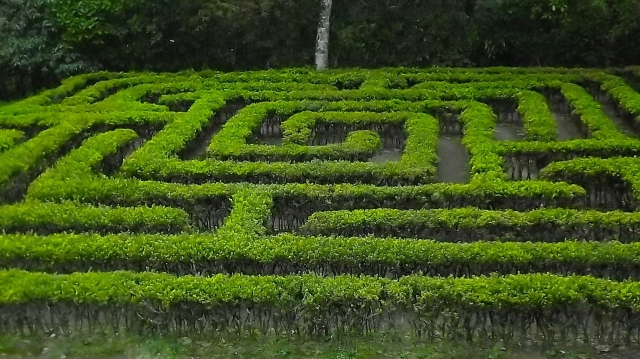 A maze in the Jardín Botánico del Quindío, in Calarcá, Quindío, Colombia. (Photo by Sergio D. Botero.)
